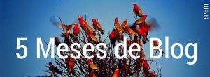 resumen-cinco-meses-blog