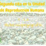 Segunda cita en la Unidad de Reproducción: 3 – La Histerosalpingografía