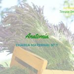 Anatomía – Charlas Maternales 7