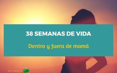 38 Semanas de vida dentro y fuera de mamá